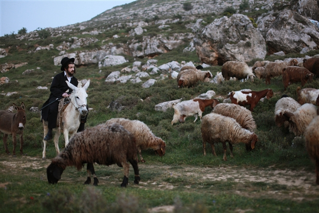 Ultra orthodox rides on a Donkey in Jerusalem mountain March 2013